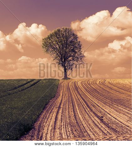 plowed field and meadow with grass and tree. Toned image