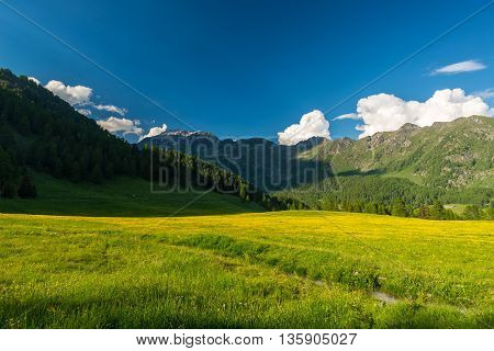 Blooming Alpine Meadow And Lush Green Woodland Set Amid High Altitude Mountain Range At Sunsets. Val