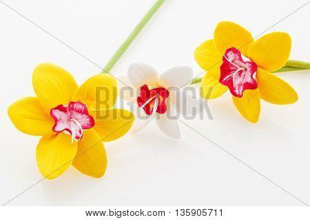 Beautiful handmade art clay narcissus flowers. Closeup over white background.