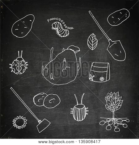 Potato growing set. Hand drawn vector stock illustration. Chalk board drawing.