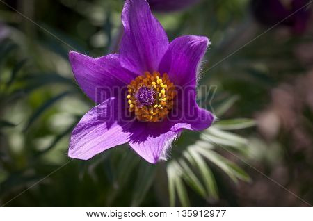 a purple flower which is unique in the world and has some pretty strong petals