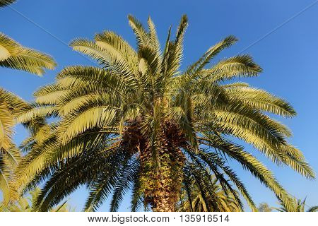 Green leaves of palm tree against the sky