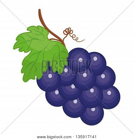 Organic and Healthy food concept represented by grapes fruit icon. isolated and flat illustration