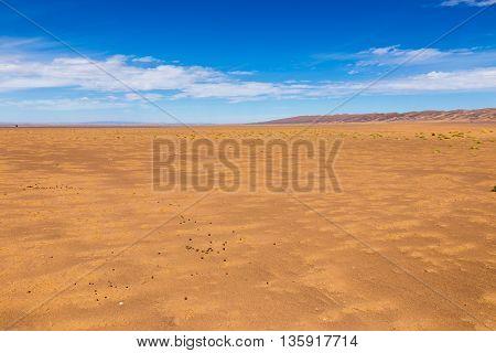 camel dung in the Sahara Desert Morocco