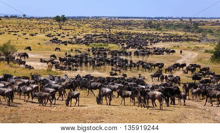 The Great Migration is setting in at Serengeti