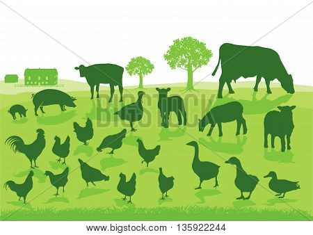 Organic Agriculture with Farm Animals, beef, pork, turkey, lamb, sheep, cows, geese, chicken, duck,