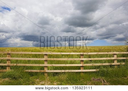 Storm Clouds Over Summer Barley Field