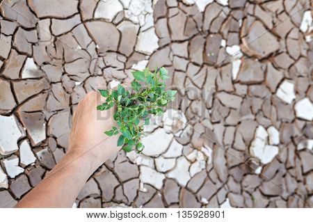 Hands holding green tree sprout on cracked ground