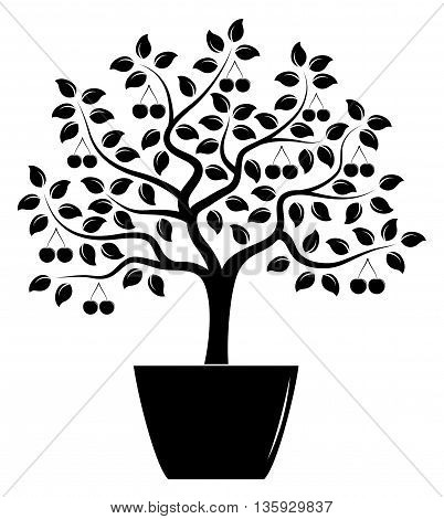 vector cherry tree in pot isolated on white background