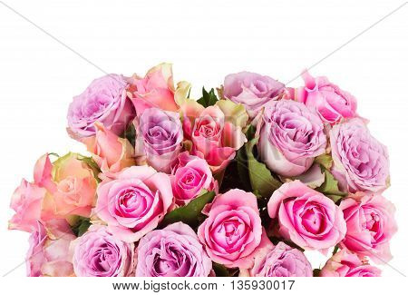 pink and violet fresh roses posy close up isolated on white background