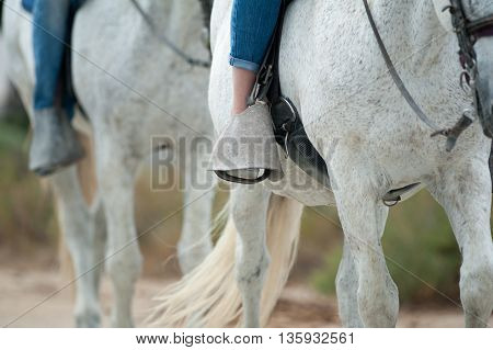 horse tourism concept: riders on white horses walking in summer