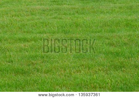 horinzontal picture of a close up of lawn
