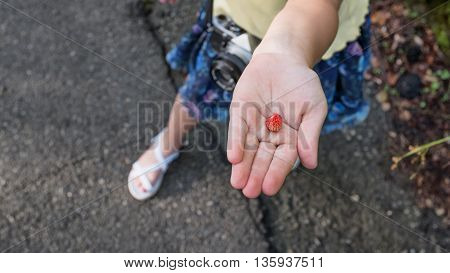 Strawberry Fruit In Child Hand, Selective Focus