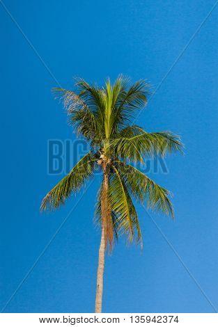 Palm Overhead Azure Backdrop