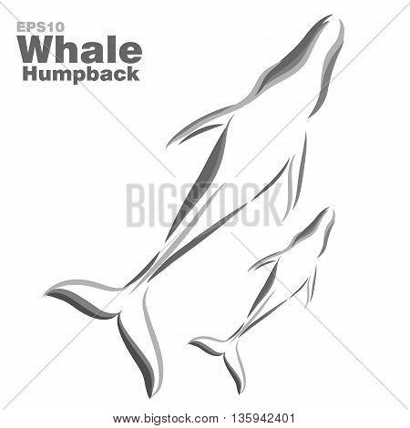 Vector illustration of humpback whales. Clip art illustration