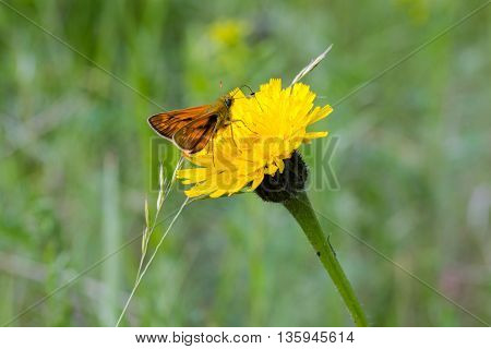 butterfly sits on a yellow flower field
