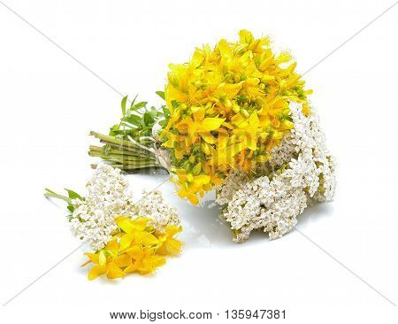 Hypericum flowers and yarrow flowers on white background