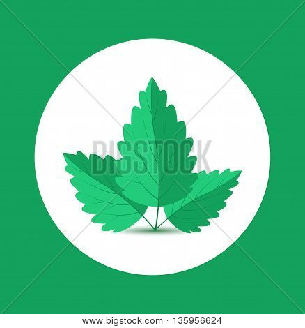Background with green mint leaves Vector Illustration