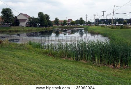 SHOREWOOD, ILLINOIS / UNITED STATES - AUGUST 30, 2015: A wetland stands near a major intersection in Shorewood.