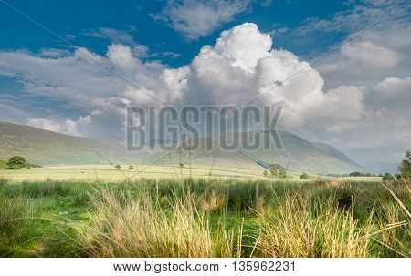 British Countryside View Through Grass Spikelets, Bright Sunny Day