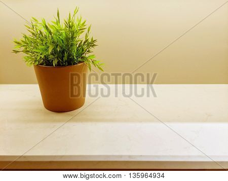 Green plant on the kitchen countertop. Simple home decor.