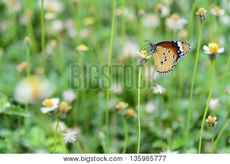 The butterflythe butterfly with the flower in the garden.Beautiful butterfly and the flower in the garden