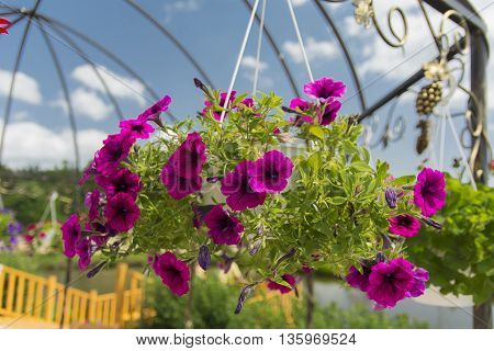 Monastery of Our Lady of Kazan. The design of the monastery. flowers