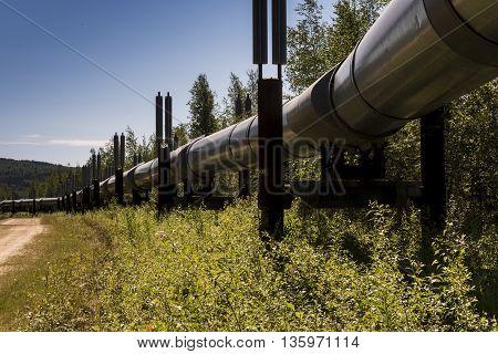 The Trans-Alaska oil pipeline in the summer.