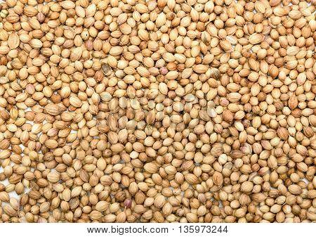 Top view of Coriander seeds background texture