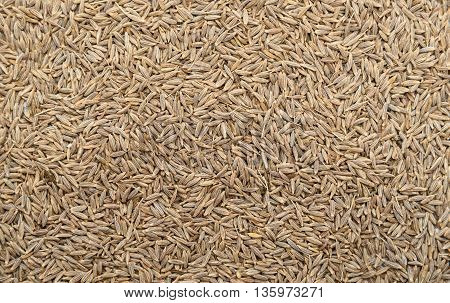 Top view of Cumin seeds background texture