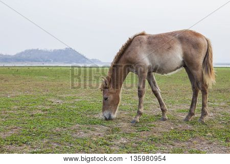 horse standing in rural farm feeding field