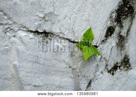 the white wall and small tree that is growing