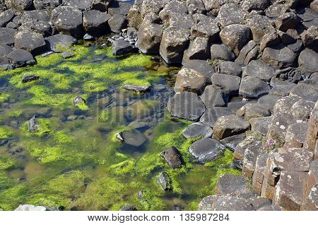 Part Of Giant Causeway With Rocks And Seaweed In The Water In Ireland
