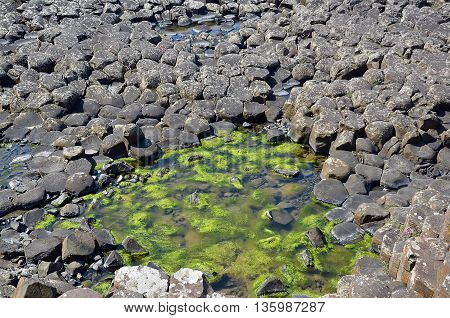 Part Of Giant Causeway With Seaweed Between Rocks And See In Ireland