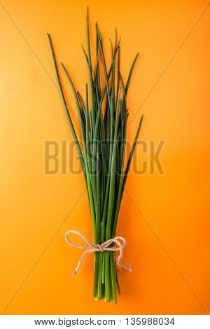 Fresh green chives on orange background