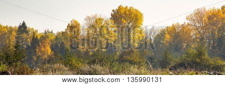 Foggy autumn panorama background with colorful green and yellow trees