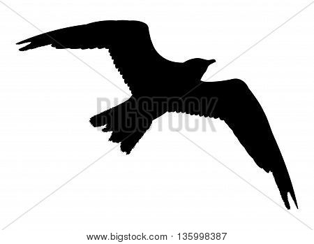 Seagull Flying Silhouette Isolated On White Background. Vector Illustration