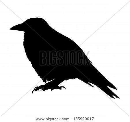 Raven Silhouette Isolated On White Background. Vector Illustration