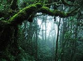 stock photo of tropical rainforest  - tropical rain forest - JPG