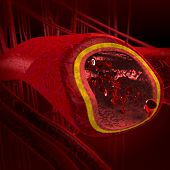 stock photo of leukocyte  - human blood arteries and veins cut section showing red blood cells - JPG
