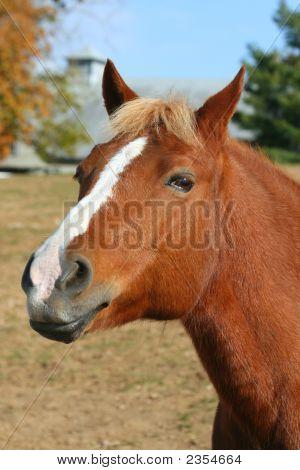 Inquisitive Horse