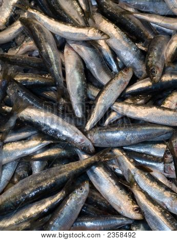 Sardines Fishes At The Local Market