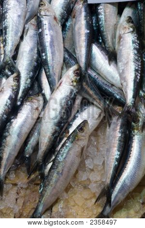 Sardines In Ice At The Local Market