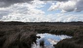 Cloudy Sky Reflected In An Australian Marsh poster