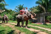 Happy Family Is Riding An Elephant. Dad And Two Cute Sons Go By On An Elephant Through The Tropical  poster