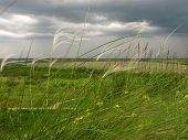 Lower Point Of Shooting Feather Grass In Spring Overcast Windy And Cloudy poster
