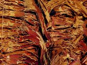 Texture Of Palm Bark Macro. Palm Tree Large Trunk Detailed Structure Background And Texture Of Bark. poster
