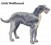 Colorful Decorative Portrait Of Standing In Profile Irish Wolfhound, Vector Isolated Illustration On poster