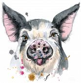 Cute Piggy. Pig For T-shirt Graphics. Watercolor Pig In Black Spots Illustration poster
