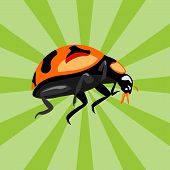 Animal Beetle Insect Illustration.animal Beetle Insect Icon Modern Symbol For Graphic And Web Design poster